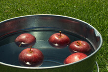 Apples Floating A In Bucket Of Water.