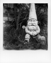 Sleeping Gnome Sits Next To Dandelion
