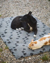 Cat And Dog Laying On The Same Blanket In Garden