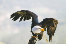 Show Of Eagles