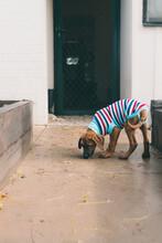 Puppy In Winter Coat