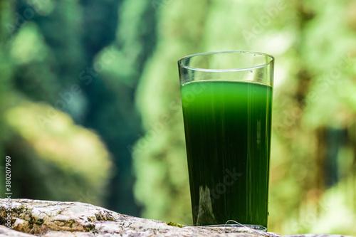 栄養補助食品 青汁