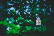 Lamp In The Forest