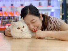 White Persian Cat With Woman Hug