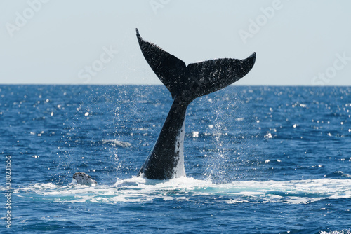 Photo Whales closeup at Brisbane Australia