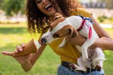Selective Focus Of Excited Woman Feeding Jack Russell Terrier Dog Ice Cream