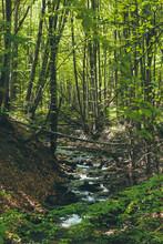 Babbling Brook In Beech Forest