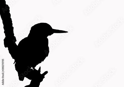 Obraz na płótnie oiseau poser branche silhouette