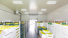Produce Cold Storage Room Warehouse