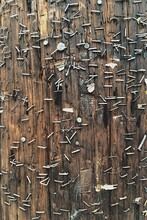 A Wooden Telephone Pole Filled With Staples And Nails