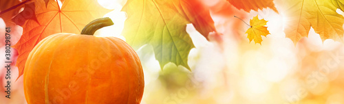 Tablou Canvas Thanksgiving pumpkin on autumn leaves background