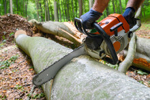 Working In The Woods With A Ch...