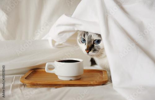 Photo Morning awakening coffee in bed