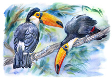 Toucans Toko On A Branch In A ...