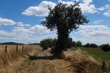 Chemin Rural Du Sud Ouest De L...