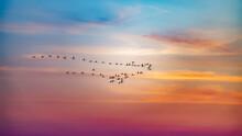 The Flock Of Flamingos