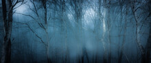 Dark Misty Forest Panorama Fan...