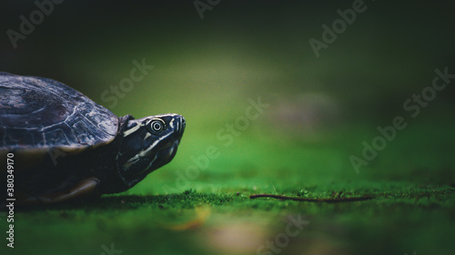 Photo Baby turtle on moss in nature