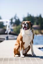 Portrait Of Dog Sitting On Jetty