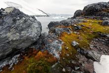 Polar Vegetation