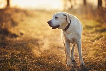 Dog Walking On Footpath During Autumn Morning