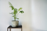 clean interior with stand and palm tree plant on empty white wall background for text