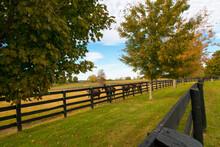 Horses At Horsefarm. Autumn Co...