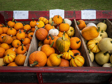 Mixed Pumpkins And Gourds For ...