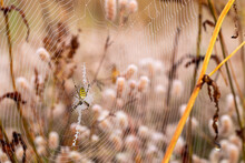 Spider Web With Dew Drops. Arg...