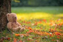 Teddy Bear Toy Sitting Under A...