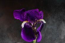 Foto En Primavera Florece  Lir...