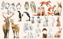 Hand-drawn Wildlife Set Waterc...