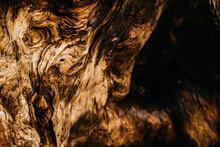 Close Up Shot Of Tree Wood Grain Texture On Drift Wood