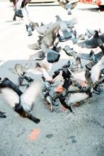 Flock Of Pigeons Flying Away