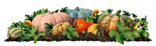 Autumn Pumpkin Border Design