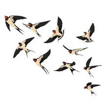 Flock Flying Swallows Illustra...
