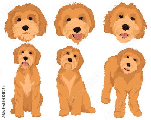 Foto set cartoon dog breeds goldendoodle collection colorful portraits goldendoodle d