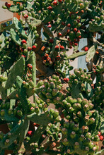 Green Cactus Plant With Red Dots