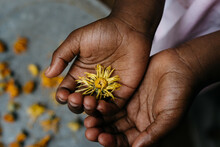 African American Girl Holding A Yellow Marigold Flower In Her Palms