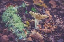 Mushroom On The Ground