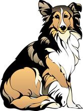 Kolly Dog Shepherd