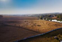 Horse Herd At A Ukrainian Ranc...