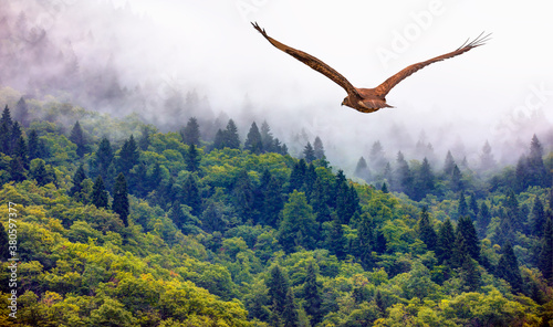 Stampa su Tela Fog covering on the mountain forest with red tailed hawk