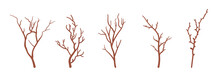 Dry Tree Brown Branches Set, Natural Dried Decorative Sticks. Organic Atmosphere, Old Floral Home Decor, Eco Office Decoration, Party Holiday Botanical Ornament. Vector Flat Style Cartoon Illustration
