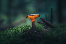 Glowing Mushroom In Dark Fores...
