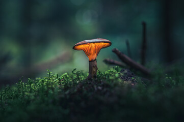 Glowing mushroom in dark forest in vibrant colors covered in moss. Magical scenery of light coming out of mushroom cap.
