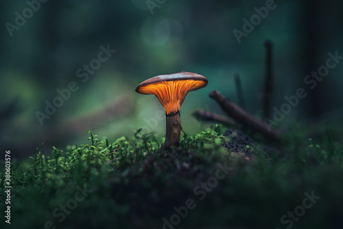 Cuadros en Lienzo Glowing mushroom in dark forest in vibrant colors covered in moss
