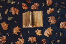 Vintage Book And Autumn Maple ...