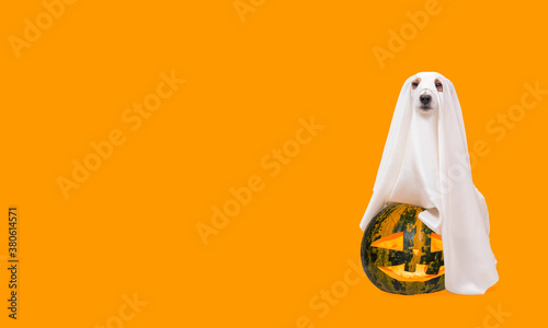 Dog under white sheet as Halloween costume of spooky ghost with carved blazing p Canvas Print