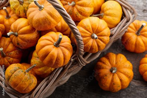 Fotomural Beautiful mini pumpkins in basket